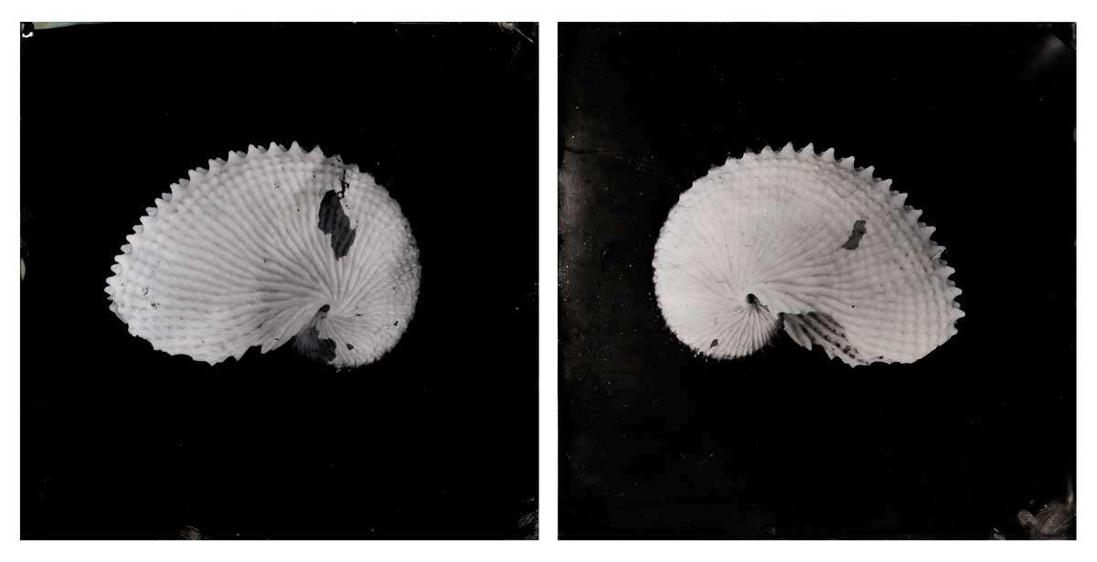 'Portsea #5 & #6 (Argonaught Shells)', diptych, Resin and unique collodion positive on perspex, 30 x 30 cm each panel