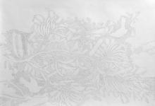 'Banksia', graphite on Fabriano paper, 50 x 66 cm, 2014
