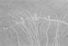 'Casuarina', graphite on Fabriano paper, 50 x 70 cm, 2014