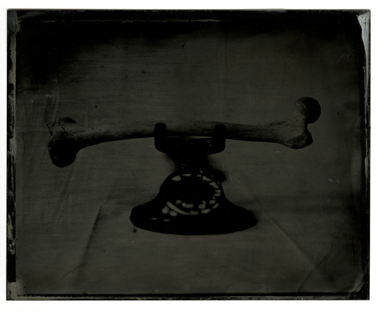 Still Life After Penn #5, 2017<br>tintype, 5 x 4 inches