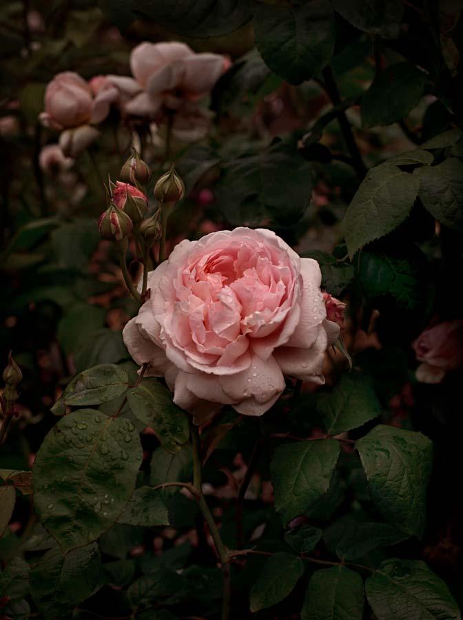 Bloom #03
