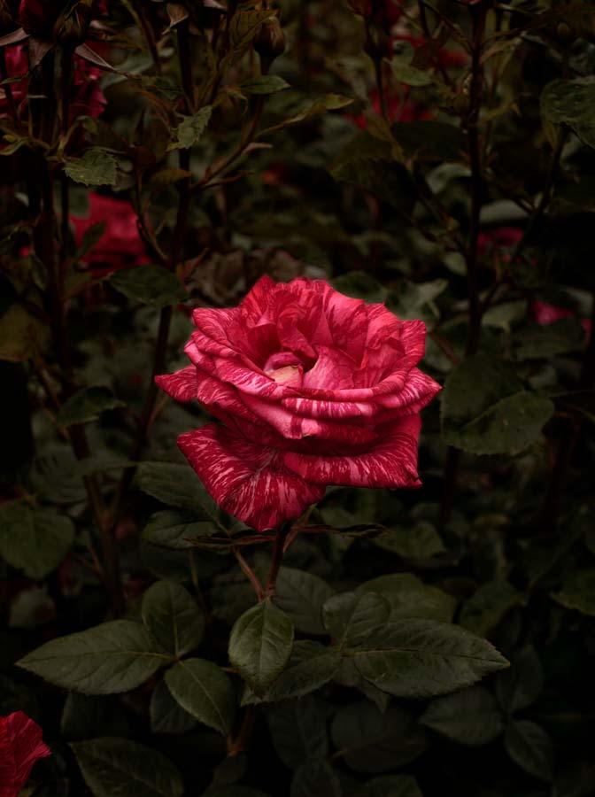 Bloom #07