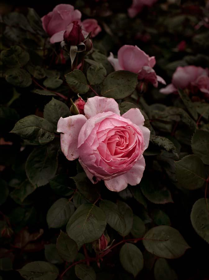 Bloom #09