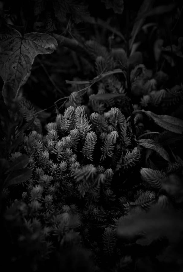 Naked Garden 05