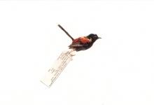 the-birds002