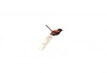 the-birds002_web
