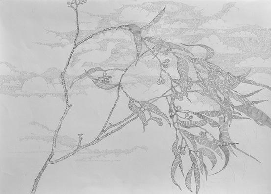 Eucalypt(pencildrawing)