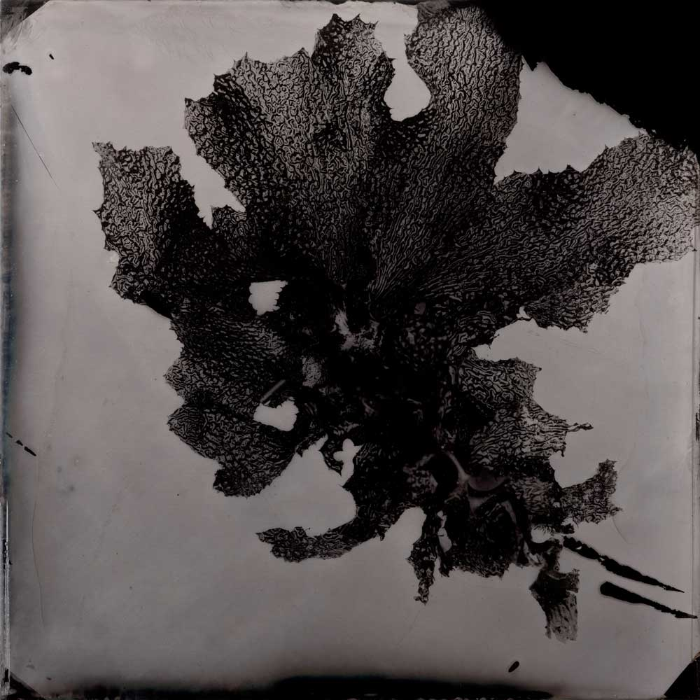 'Portsea #8 (kelp corner)', Resin and unique collodion positive on perspex, 30 x 30 cm