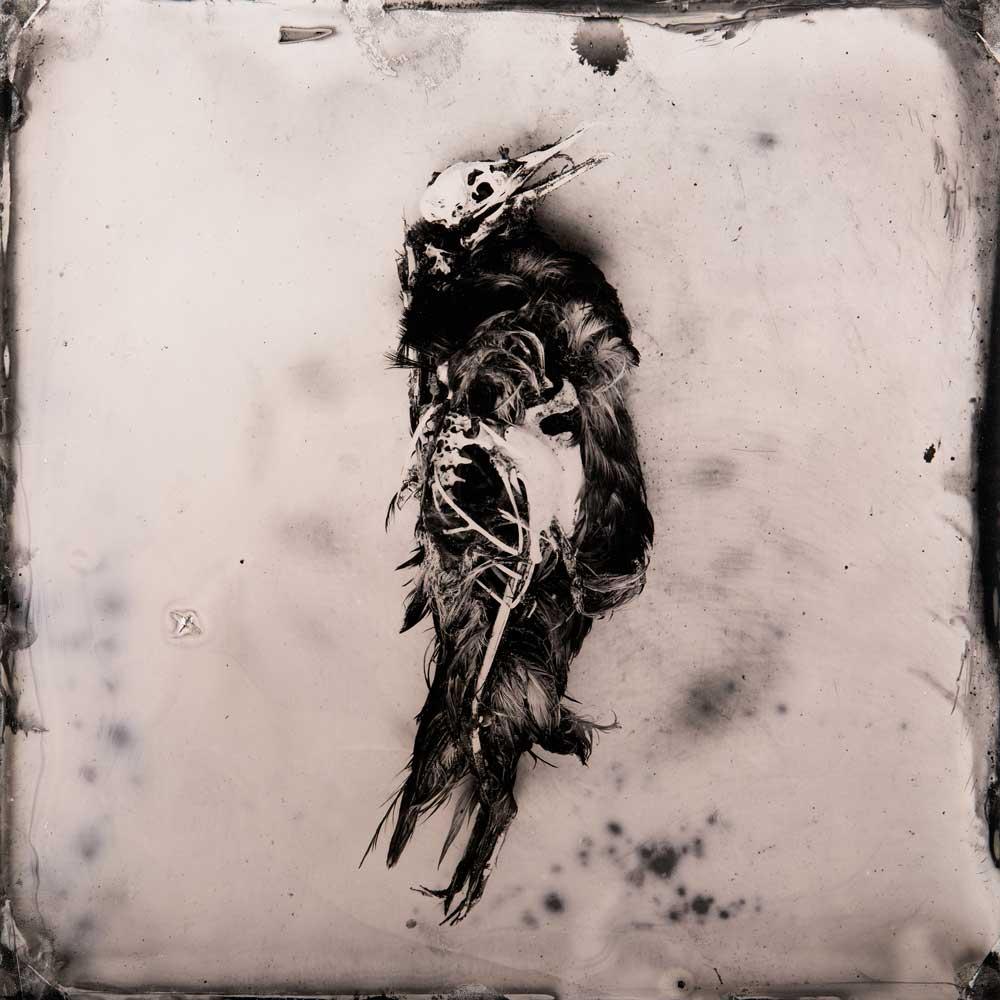 'Bermagui #19 (dark kelp)', Resin and unique collodion positive on perspex, 30 x 30 cm