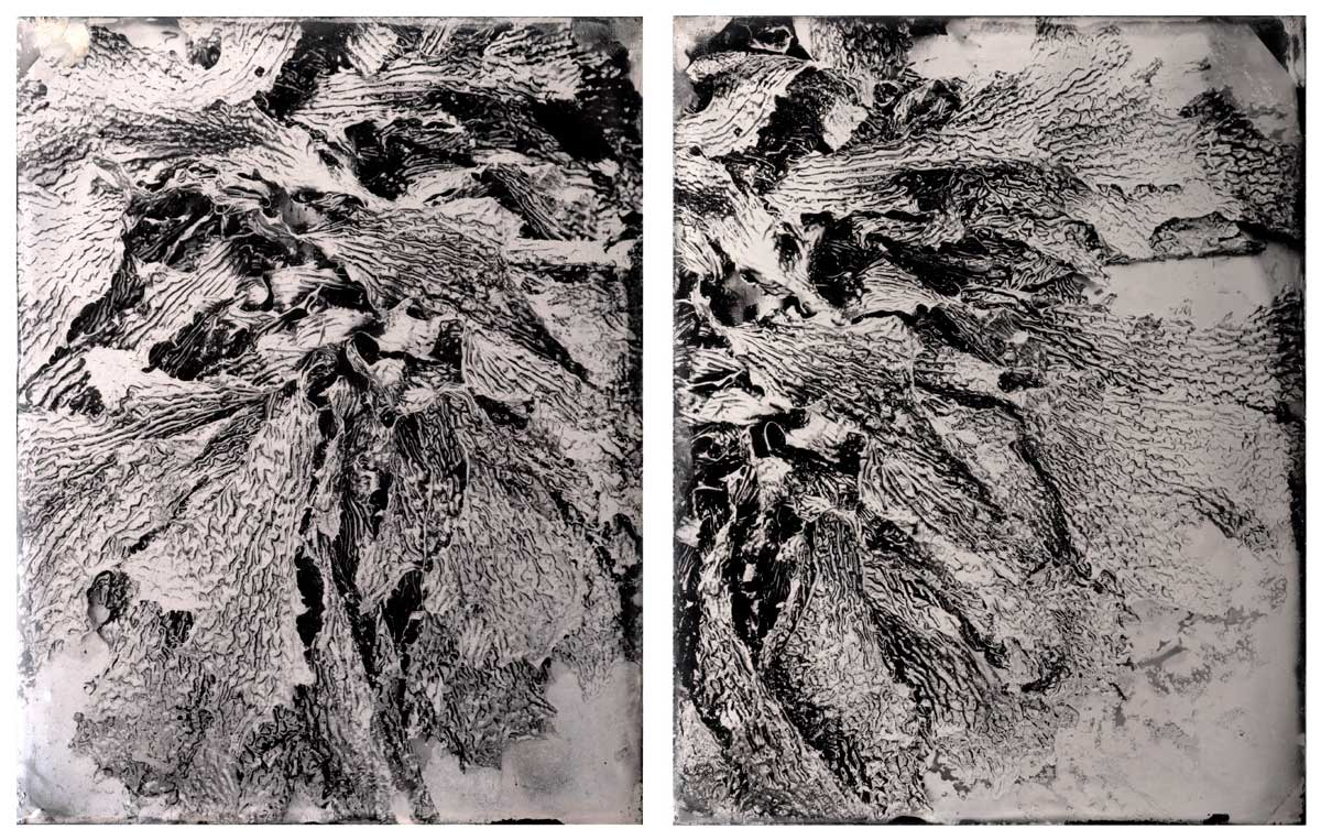'Sorrento #6 & #7 (kelp)', diptych, Resin and unique collodion positive on perspex, 22 x 18 cm each panel