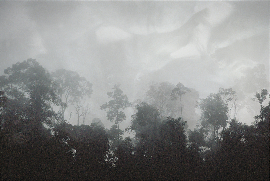 Lisa Roet, The Forest 2, 2000-01<br/>duratras, light box, 108 x 160 cm, edition of 6
