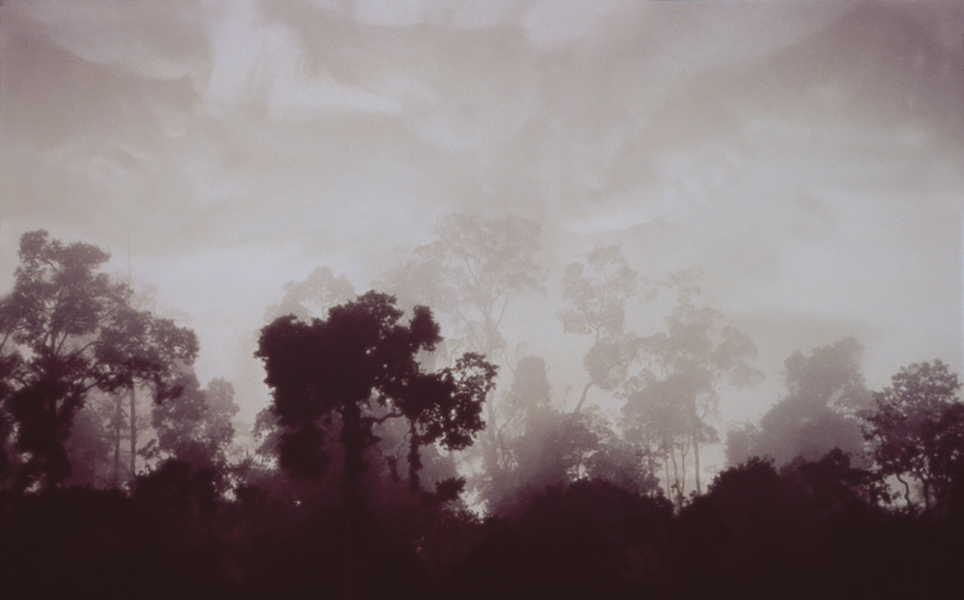 Lisa Roet, The Forest 1, 2000-01<br/>Duratras, lightbox, 108 x 160 cm, edition of 6
