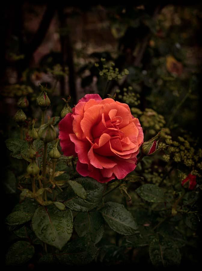 Bloom #02