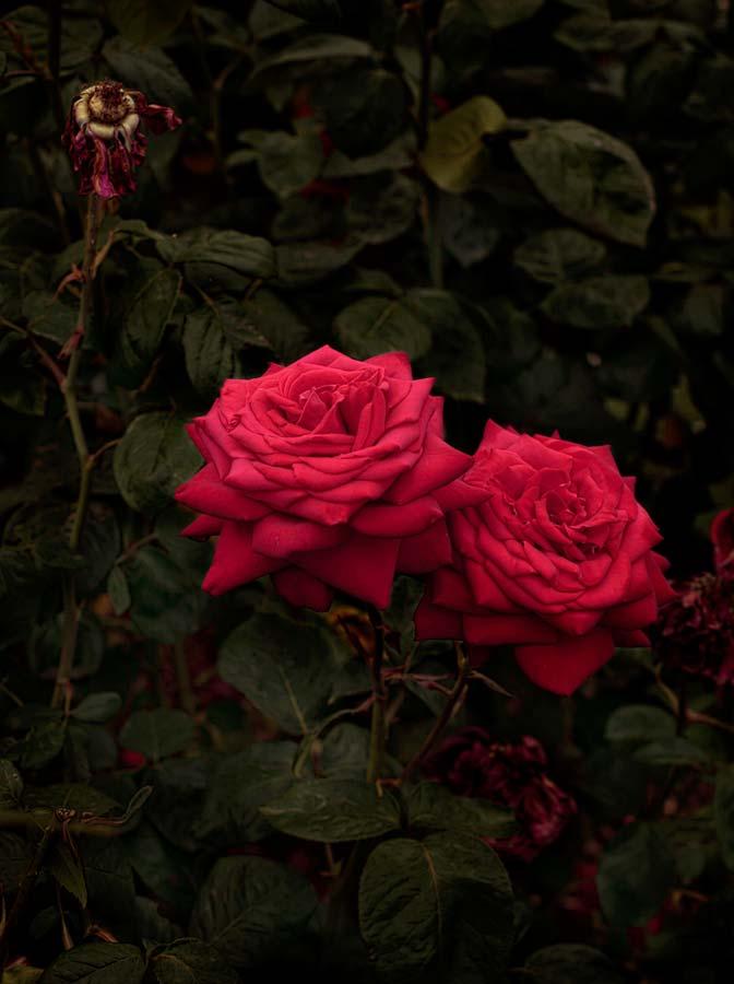 Bloom #04