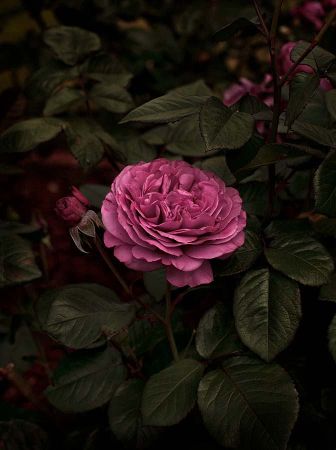 Bloom #05