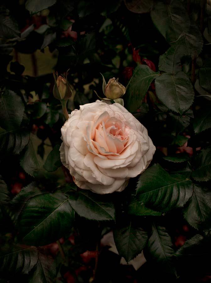 Bloom #06