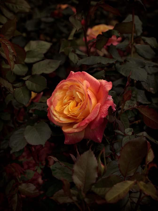 Bloom #08