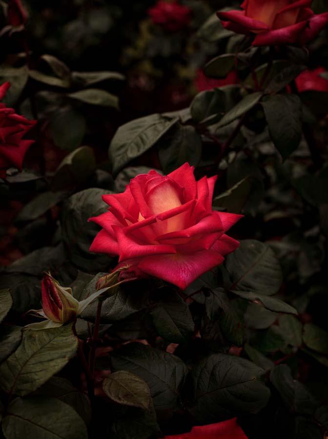 Bloom #10