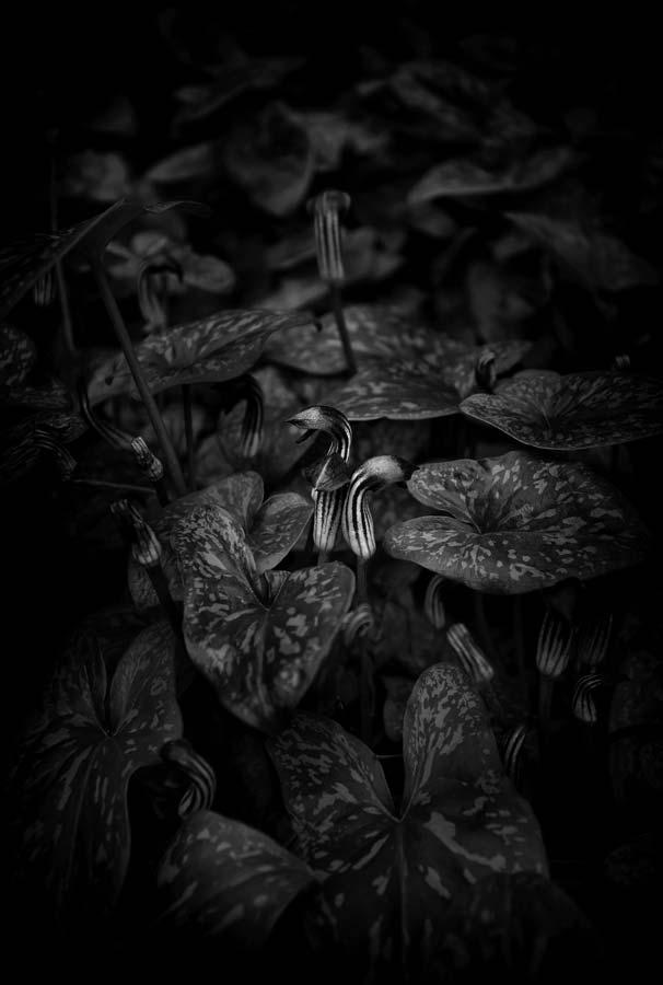 Naked Garden 02
