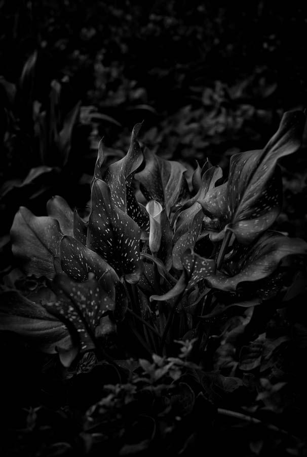 Naked Garden 06