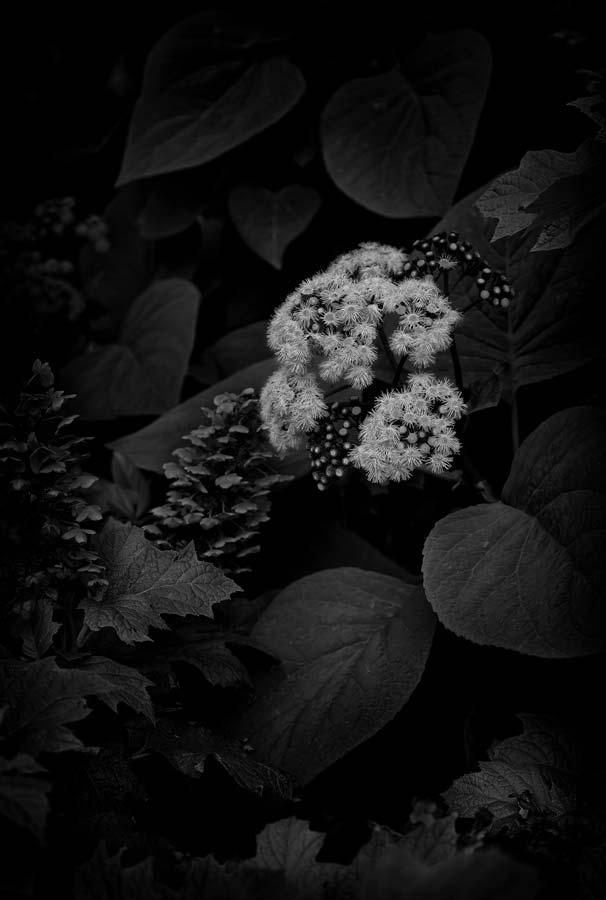 Naked Garden 09