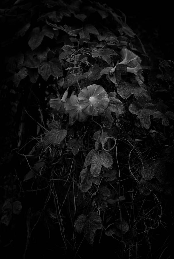 Naked Garden 10
