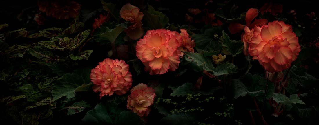 Flores Venereae #10