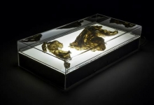 'Centre of my Sinful Earth (large x-ray box)', 2013, porcelain lingerie, x-ray box, perspex case, 25 x 80 x 40 cm