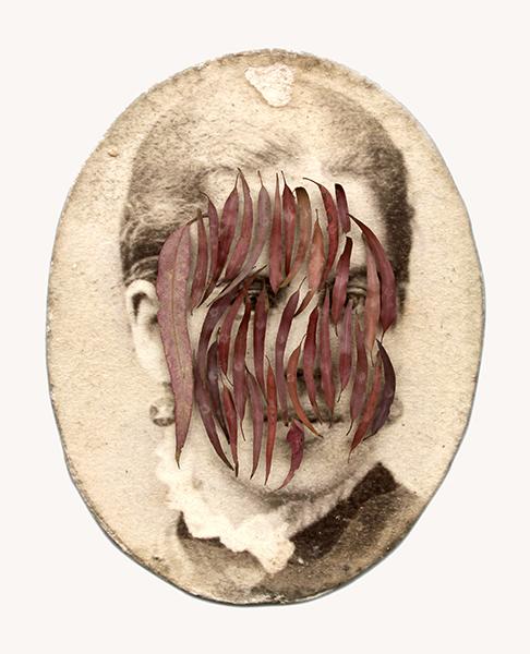 Megan Evans, Isabella Robertson (younger), 2016 <br/> digital print on rag, pins, charcoal eucalyptus leaves, 69.5 x 57 x 10 cm